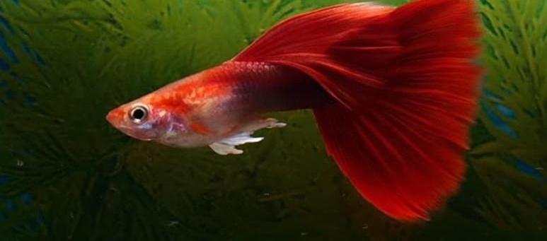 哪些观赏鱼比较好养